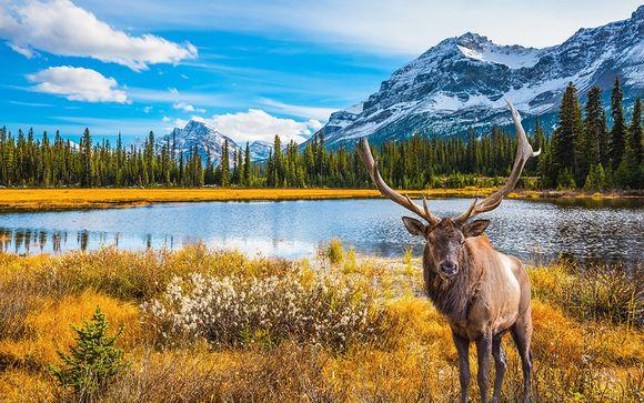 Estate e autunno in Canada con noleggio auto incluso