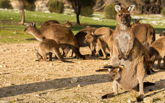 Welkom in... Australië