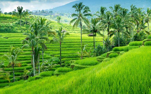 Welkom in... Bali!