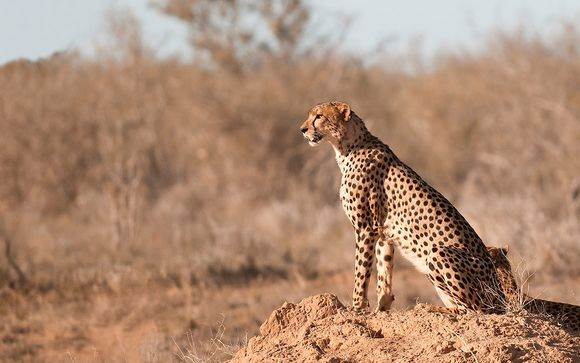 1 nacht op safari in Ngutuni / Taita Hills
