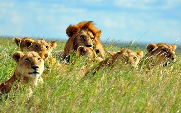 Uw optionele safari
