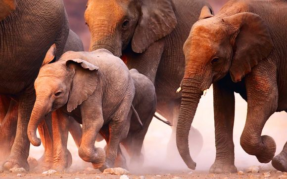 Your Optional Safaris