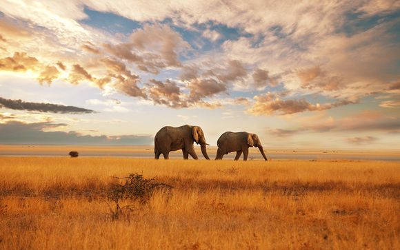 South African Wonders