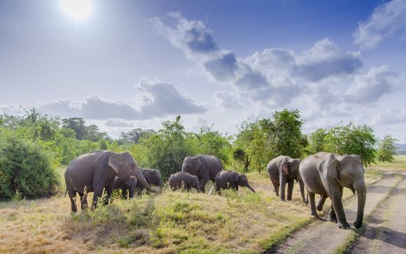 Sri Lankan Tour & West Coast Stay With Optional Dubai Extension