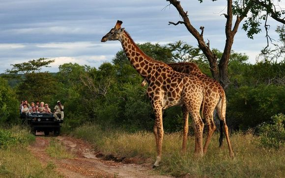 Optional Safari Extension