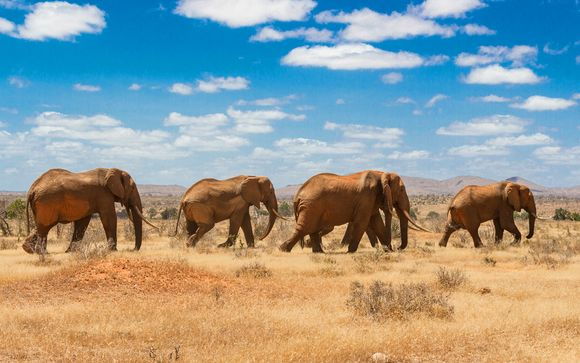 Serena Luxury Beach Escape Plus Safaris