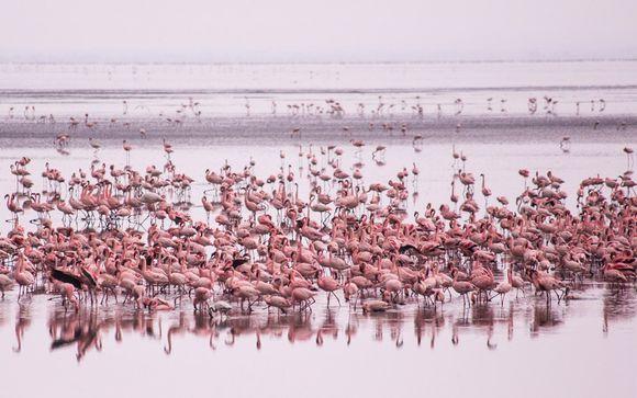 Your 3-Night Best of Tanzania Safari Itinerary