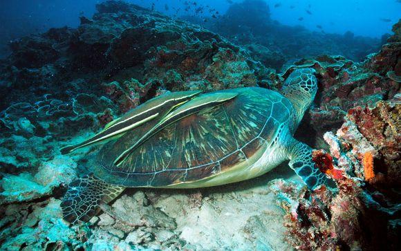 Coucher de soleil et nage avec les tortues