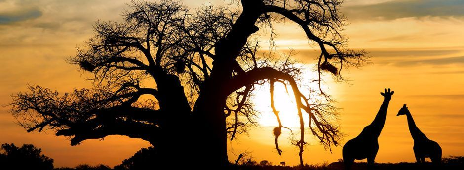 Viajes  Africa